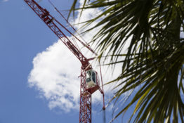 Palm tree and crane